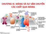 Bài giảng hoá sinh động vật - Chương III: Màng và sự vận chuyển các chất qua màng