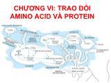 Bài giảng hoá sinh động vật - Chương vi:Trao đổi amino acid và protein