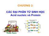 Bài giảng sinh học phân tử - Chương 2: Các đại phân tử sinh học Acid nucleic và Protein